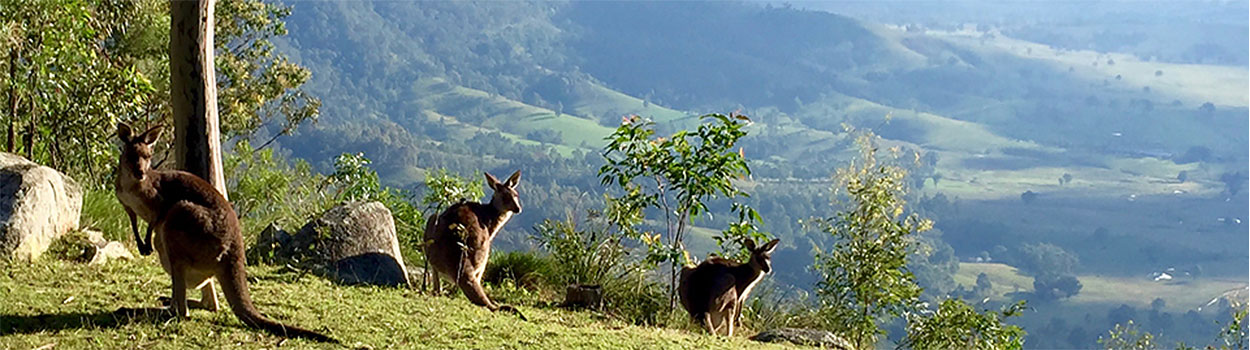 Group of kangaroos at top of a hill with valley and mountain in distance.